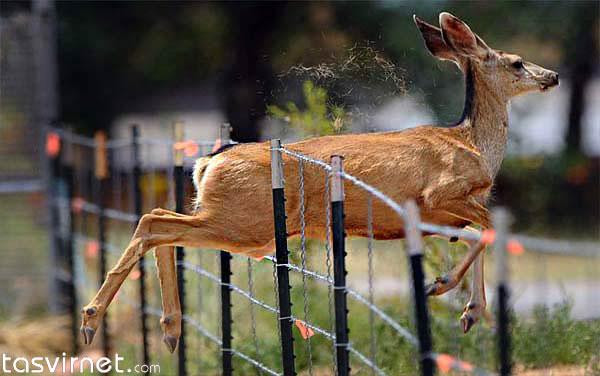 فرار پر زحمت حیوانات از منطقه آتش سوزی