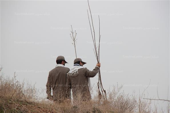 مراسم روز درختکاری با حضور رییس سازمان بسیج
