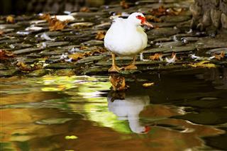 مجیداصغری, پرنده