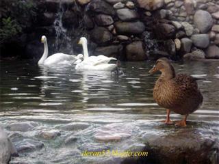 قربان صحرائی چالهسرائی, باغ پرندگان