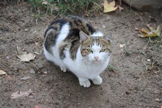 محمدتقیانی, گربه