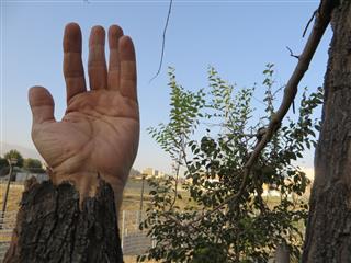 محمدمهدی شجاعی, هم ریشه