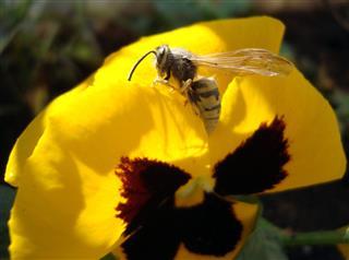 مژگان سادات شجاعی, زنبور زیبا