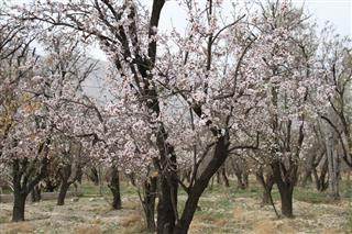 فرامرز توکلی, بهار در شیراز